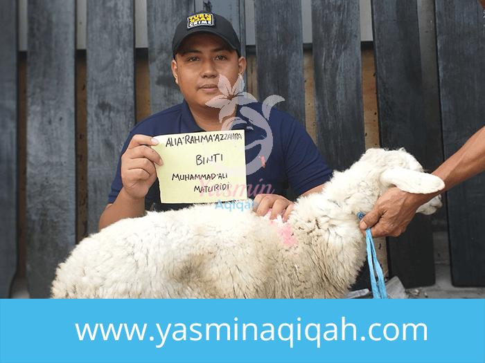 tempat jual kambing aqiqah